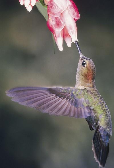 Hummingbird_post_2